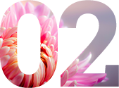 chrysanthemum-202483-1280