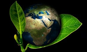 doigts-verts-international